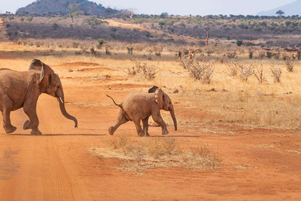safari-4043090_1920