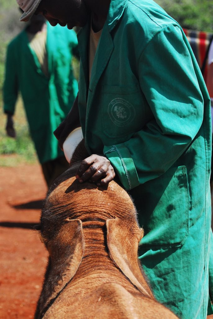 feeding-baby-elephants-4734532_1920